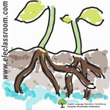 Photosynthesis Flashcard 1
