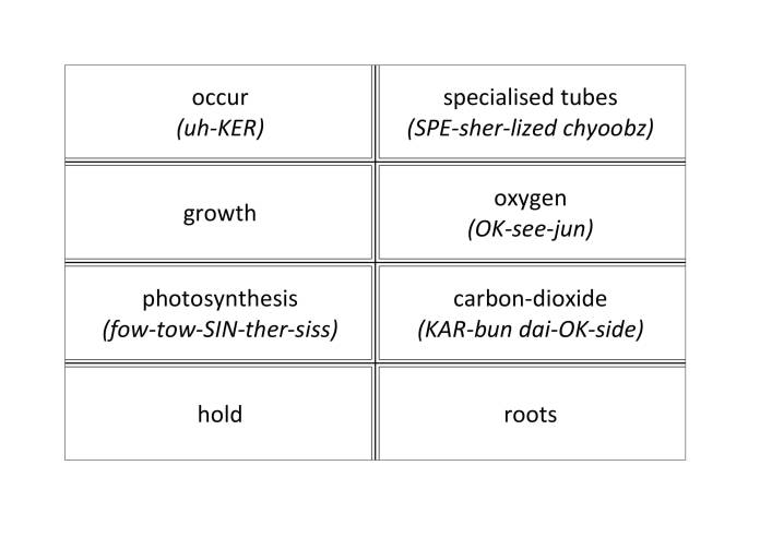 Photosynthesis Word Cards-4